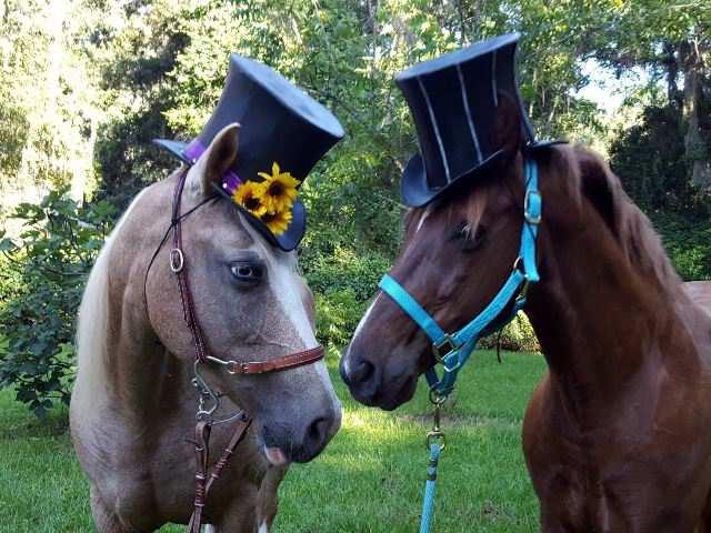 CABALLOS HATS & HORSES