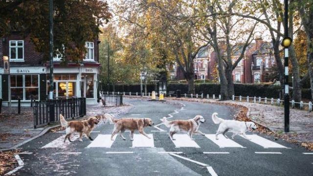 FOTO DE PERROS EN LONDRES QUE HACE REFERENCIA A LOS BEATLES
