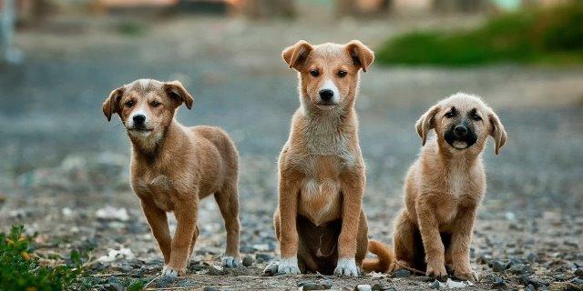 Perros que necesitan Adopción y que podrían ser el Rey de tu Casa