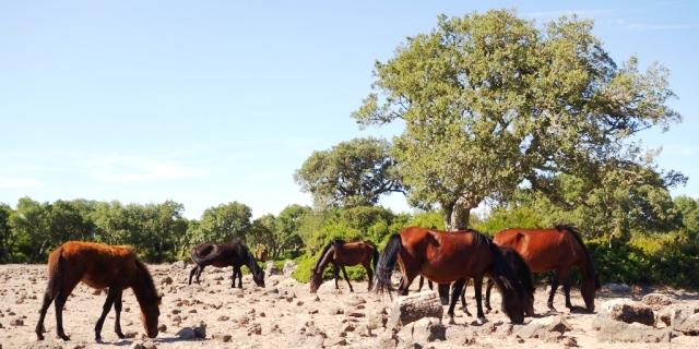 Cerdeña: Los caballos salvajes de Giara di Gesturi