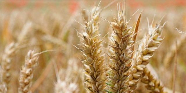 Vivir sin gluten, una necesidad o una moda peligrosa para nuestra salud