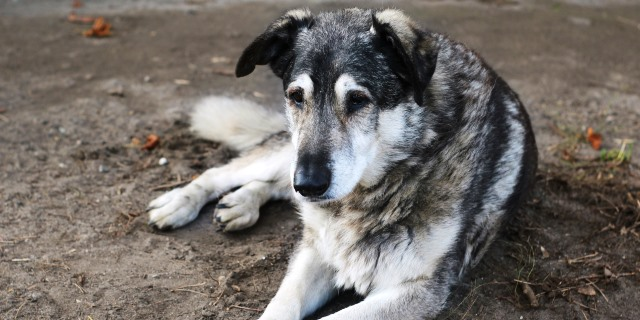 Guía de consejos para el cuidado de perros mayores