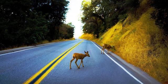 accidentes de tráfico provocados por animales