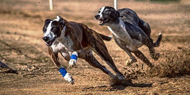 Los perros más rápidos
