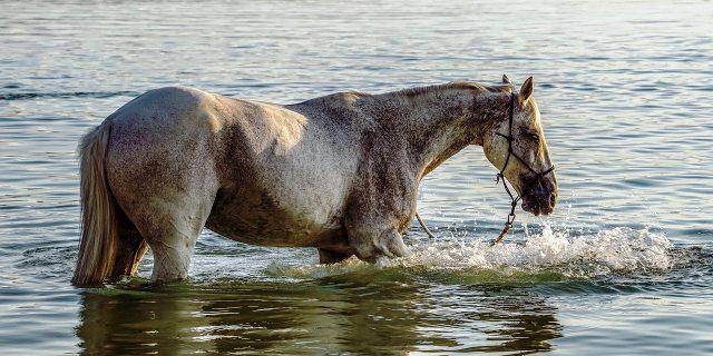 caballo con latherina