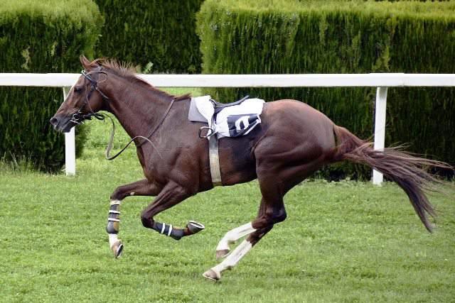 latherina en caballos