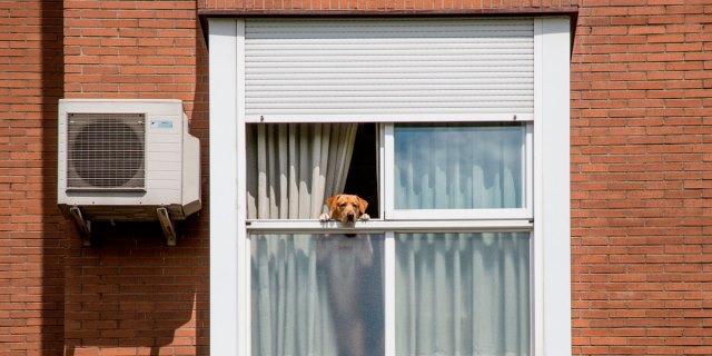 perro en confinamiento