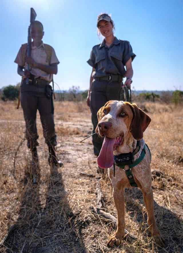 perros cuidan de rinocerontes y de vida silvestre en Sudáfrica