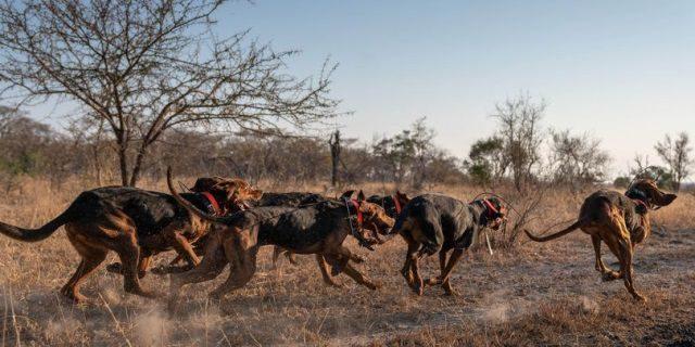perros entrenados en Sudáfrica