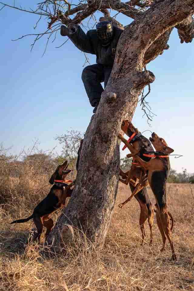 perros entrenados para salvar rinocerontes