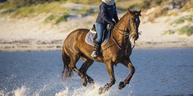 Ya pueden montar a caballo los jinetes federados