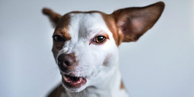 cosas que odian los perros