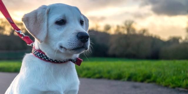 6 errores comunes al  adiestrar o educar a tu perro