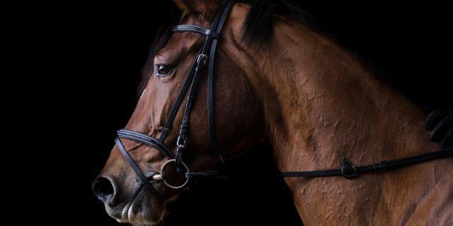 caballos y enfermedad del lunes