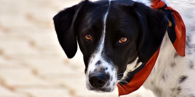 perros rutinas y horarios las claves