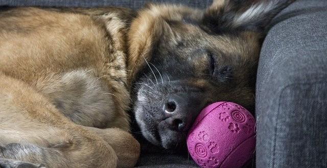 los horarios son clave para los perros