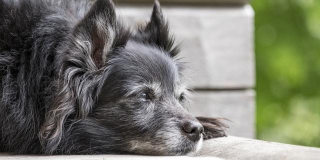 La importancia de educar a perros mayores