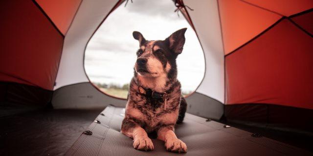GUÍA para acampar con perro: Consejos para un día de camping
