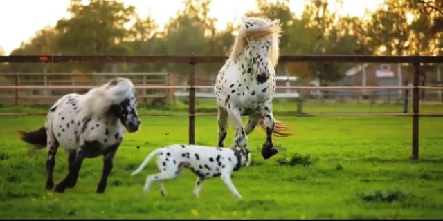 caballos y perro dálmata