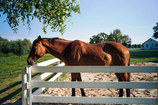 cuidados caballo mayor