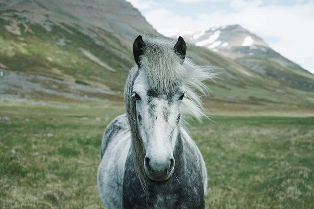 ejercicio caballo mayor