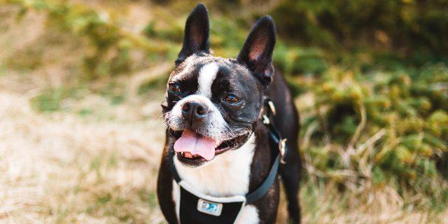 enfermedad de lyme en perros