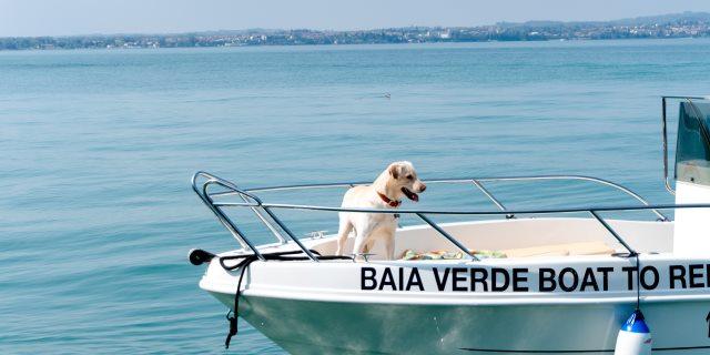 ir en barco con perros