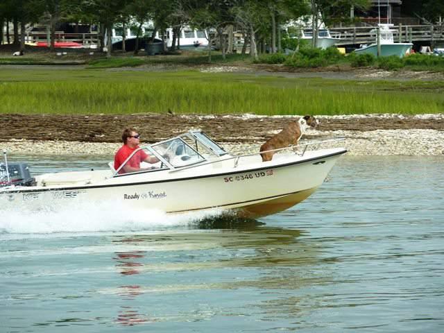 navegar con perro