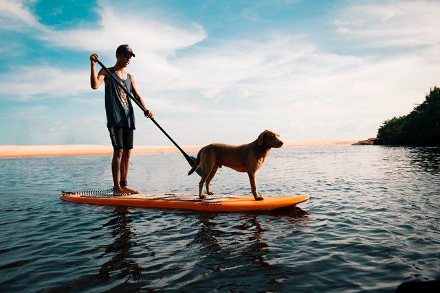perro practica paddle surf