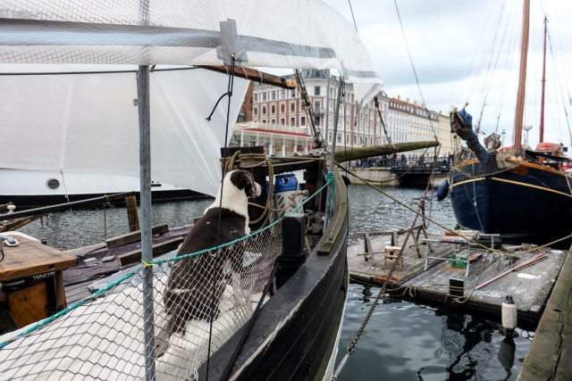 perro sentado en barco