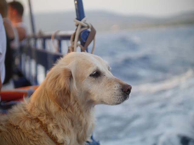 perro viaja en barco
