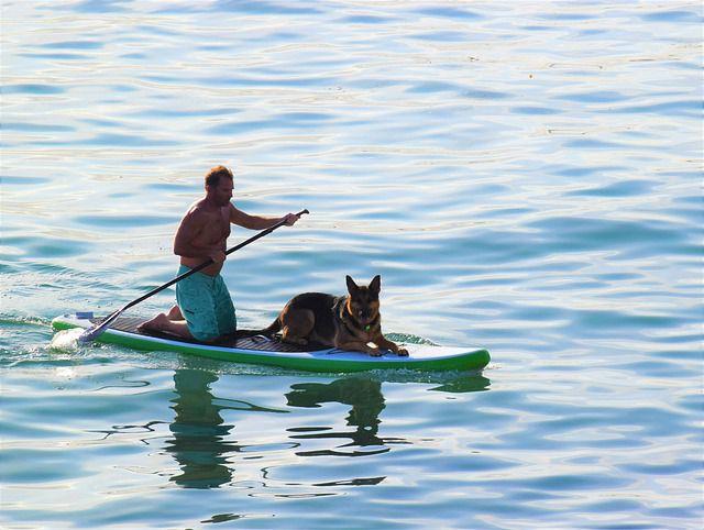 practicar paddle surf con perro