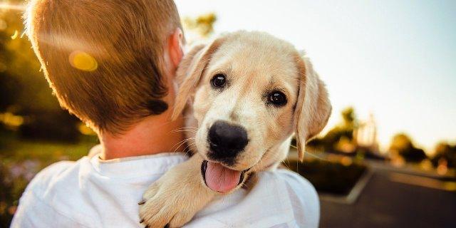 razas de perro más populares del mundo
