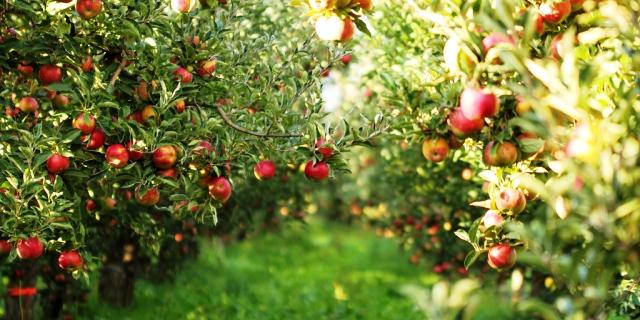 Los fruticultores con póliza de Agroseguro cobran las indemnizaciones por las pérdidas sufridas