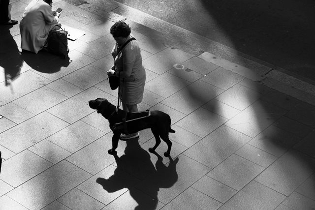 perros para personas con Alzheimer