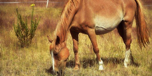 alimentación para caballos