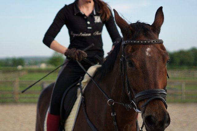 adiestramiento de caballo