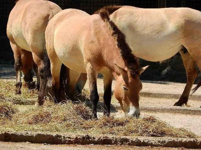 alimentación de caballos