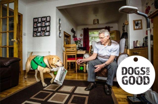 Iniciativa de Dogs for Good