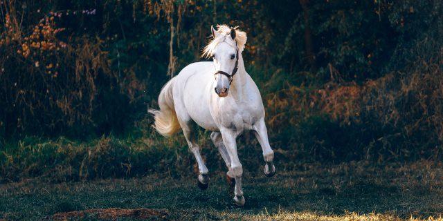 caballo infectado en Cataluña