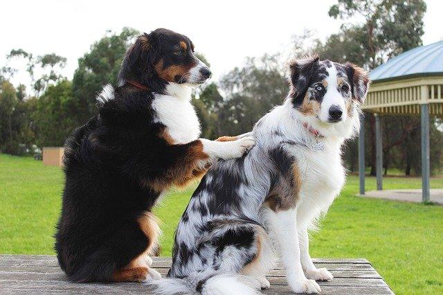 masajes para perros