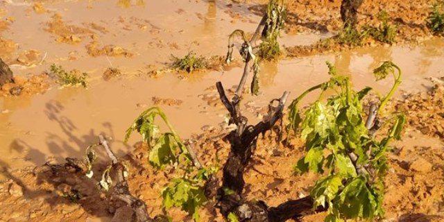 indemnizaciones de uva de vino