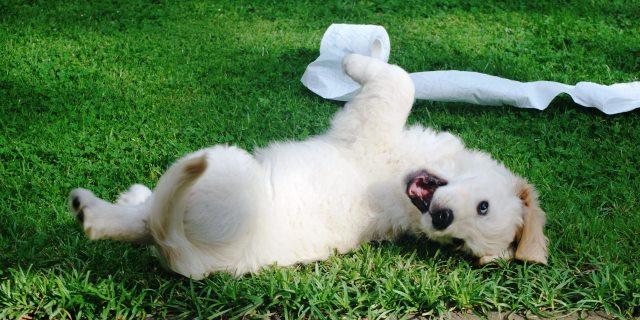 A los cuántos meses deja de crecer un perro