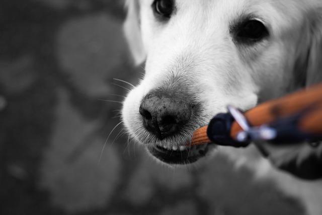 mi perro muerde la correa