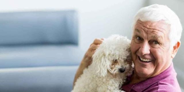 compañía de mascotas con ancianos