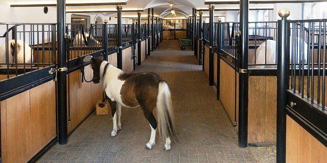 terapia de células madre en caballos