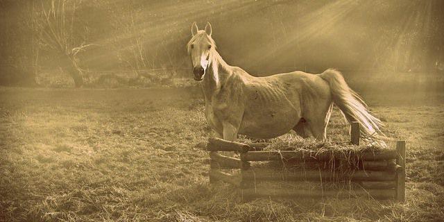 desnutrición en caballos