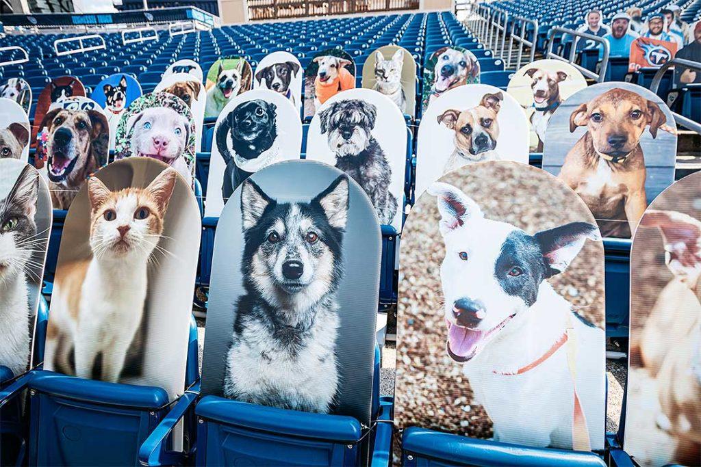 fotos de perros en adopción