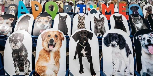 fotos de perros en adopción en las gradas