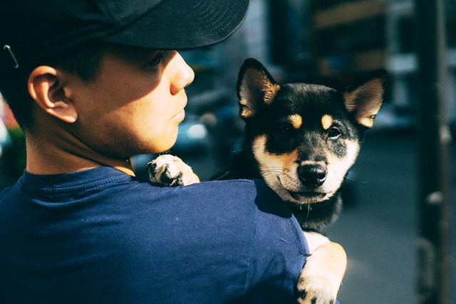image de un perro Shiba Inu negro